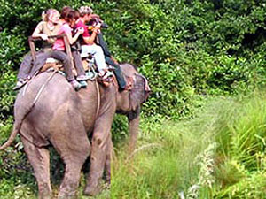 Jungle Safari in Chitwan National Park   » Click to zoom ->